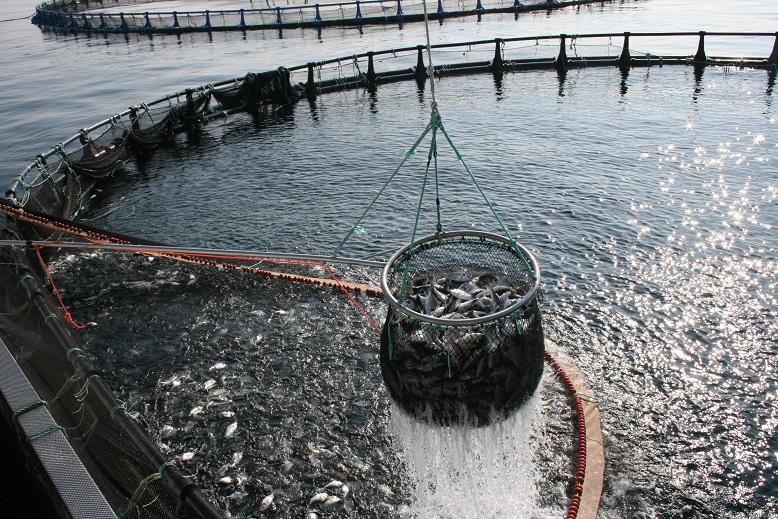 boletin pesca acuicultura